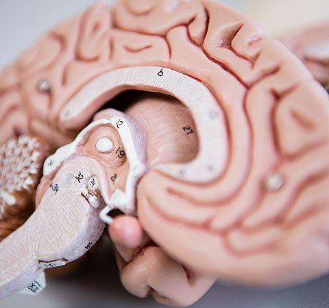 Tumoren des gesamten zentralen Nervensystems und periphere Nerven ...